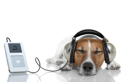 作業時に聴いている5つのプレイリストからオススメのアルバムや楽曲を紹介します
